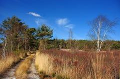 Inverno no prado. imagem de stock