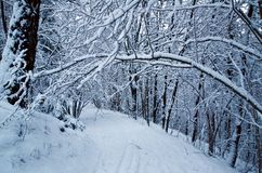 Inverno a Oslo Fotografie Stock Libere da Diritti