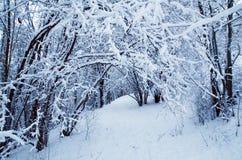 Inverno a Oslo Immagini Stock