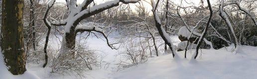Inverno panorâmico imagens de stock