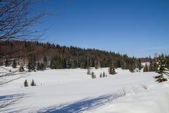 Inverno - parco nazionale slovacco di paradiso, Slovacchia Fotografia Stock Libera da Diritti