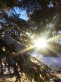 Inverno in Pavlovsk, oblast di Leningrado freddo e molto piacevole Immagine Stock Libera da Diritti