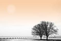 Inverno pelo lago Imagens de Stock
