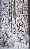 inverno picture1 branco Fotos de Stock Royalty Free