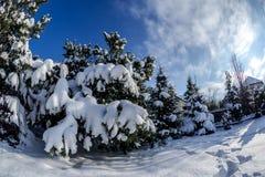 Inverno in Polonia Fotografia Stock