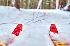 inverno que caminha em esquis Foto de Stock Royalty Free