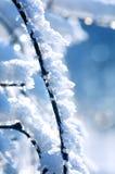 Inverno - ramifique com neve imagem de stock