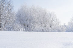 Inverno Ramos das árvores e dos arbustos na neve Fotos de Stock