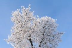 Inverno Ramos das árvores e dos arbustos na neve Imagens de Stock