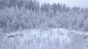 Inverno Rottura nella foresta innevata video d archivio