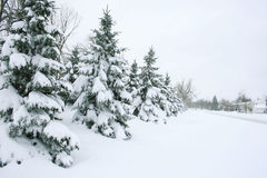 Inverno: Rua, árvores e casas cobertas neve Imagem de Stock