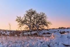 INVERNO RURALE DEL PAESAGGIO Alta Murgia National Park: colline nevose - Puglia ITALIA Immagine Stock Libera da Diritti