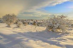 INVERNO RURALE DEL PAESAGGIO Alta Murgia National Park: colline nevose - Puglia ITALIA Immagini Stock Libere da Diritti