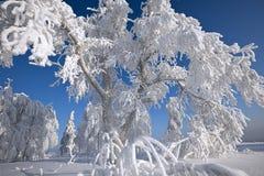Inverno russo Immagini Stock
