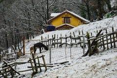 Inverno scenary ed animali in un prato della neve fotografia stock libera da diritti