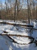 Inverno Scene2 Fotografia Stock Libera da Diritti
