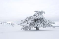 Inverno Scenics Immagine Stock