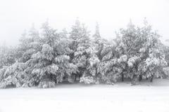 Inverno Scenics Fotografie Stock Libere da Diritti