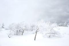 Inverno Scenics Fotografia Stock