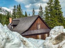 Inverno severo Fotografia Stock