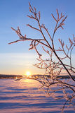 Inverno in Siberia Fotografie Stock
