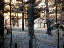 Inverno Solice Fotografia Stock