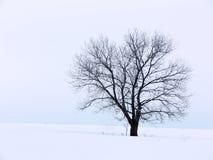 Inverno Solitute fotografia stock libera da diritti