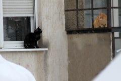 Inverno Solo bagni i gatti smarriti nell'esterno freddo nella neve La persona lascia i gatti su un inverno freddo fuori Gatto sen Immagine Stock