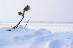 Inverno: sopravviva a Immagine Stock Libera da Diritti