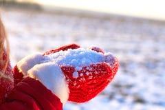Inverno sui guanti rossi cappuccio e rivestimento della natura nelle mani di neve immagine stock libera da diritti