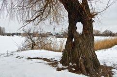 Inverno sul lago vicino al vecchio salice con una cavità fotografia stock