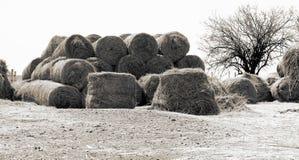 Inverno sull'azienda agricola nel nord-ovest, Sudafrica fotografie stock libere da diritti