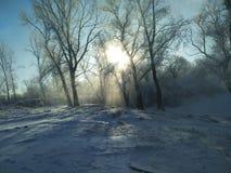 Inverno sulla natura siberiana di Yenisei, neve, dicembre, sud, il fiume Enisej immagine stock libera da diritti