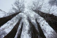 Inverno surpreendente Imagens de Stock