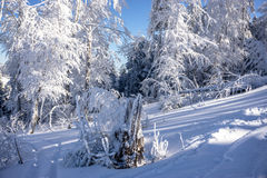 Inverno surpreendente Fotos de Stock Royalty Free