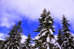 Inverno surpreendente Imagens de Stock Royalty Free