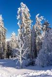 Inverno surpreendente Imagem de Stock