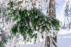 Inverno surpreendente Foto de Stock Royalty Free