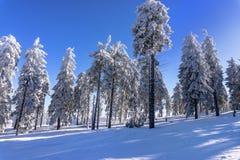 Inverno surpreendente Imagem de Stock Royalty Free
