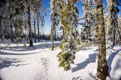 Inverno surpreendente Fotografia de Stock