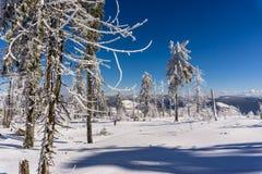 Inverno surpreendente Foto de Stock
