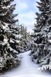 Inverno svedese fotografia stock