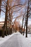 Inverno a Tallinn L'Estonia immagini stock