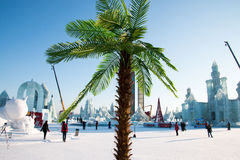 Inverno tropicale Fotografia Stock Libera da Diritti