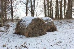 inverno um a pilha de grama seca no bosque coberto com a neve foto de stock