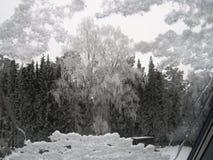 Inverno Uma árvore de vidoeiro Imagens de Stock Royalty Free