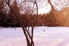 Inverno in un giardino giapponese Immagini Stock Libere da Diritti