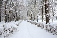 Inverno in un parco dopo una bufera di neve Fotografia Stock Libera da Diritti