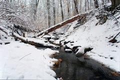 Inverno in Washington DC: Sosta del Rock Creek fotografie stock libere da diritti