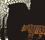 Inverse tygrysa i żyrafy kamuflaż Fotografia Stock